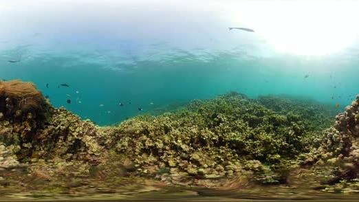 Thumbnail for Korallenriff und tropische Fische Vr360