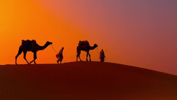 Cover Image for Cameleers, Camel Drivers at Sunset