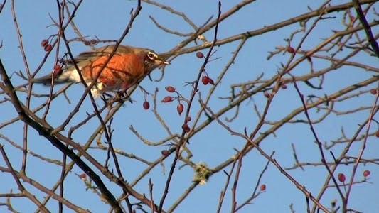 Thumbnail for Oiseau d'hiver