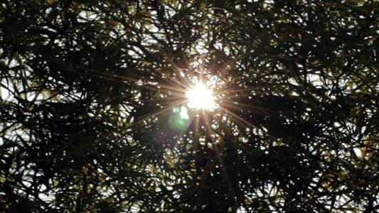 Thumbnail for Sunshine Through Bamboo 1