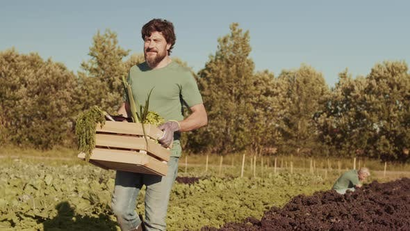 Thumbnail for Male Gardener with Box of Vegetables