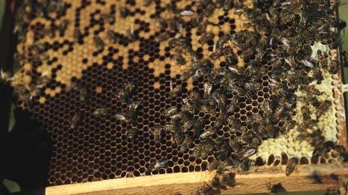 Frames of a bee hive. Hand of beekeeper is working with bees and beehives on the apiary.