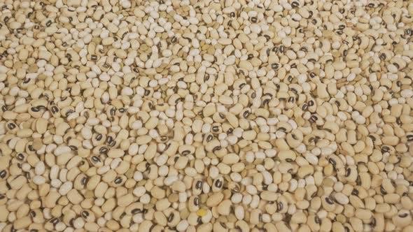 Thumbnail for Legumes