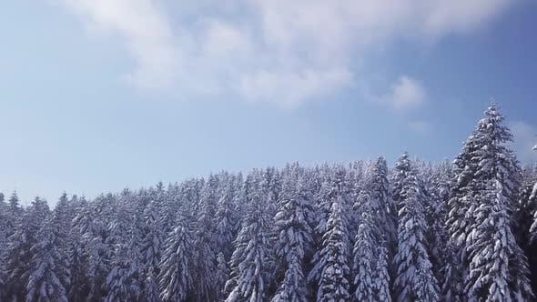 Зимний лес в солнечную погоду, Снежинки Осень. Вид с воздуха