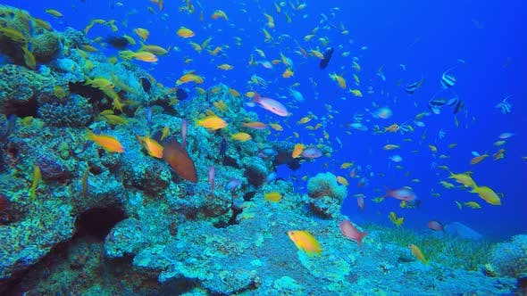 Underwater Tropical Colourful Fish