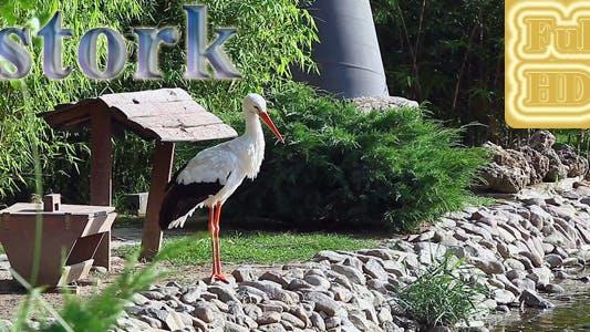 Thumbnail for White Stork