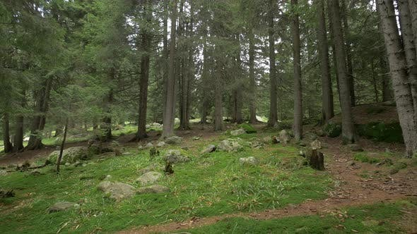 Small Forest Glade