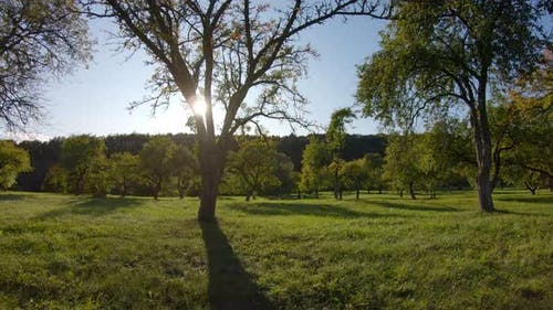 Apple orchard in autumn and the sun, shooting from gimbal