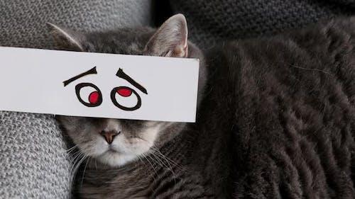 Fat British Cat in a Funny Paper Mask