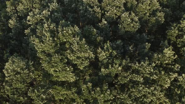 Cover Image for Tree Top Aerial View Background