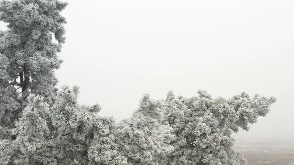 Thumbnail for White Tree