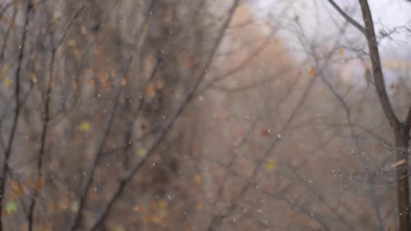 Thumbnail for First Snowfall in Late Autumn