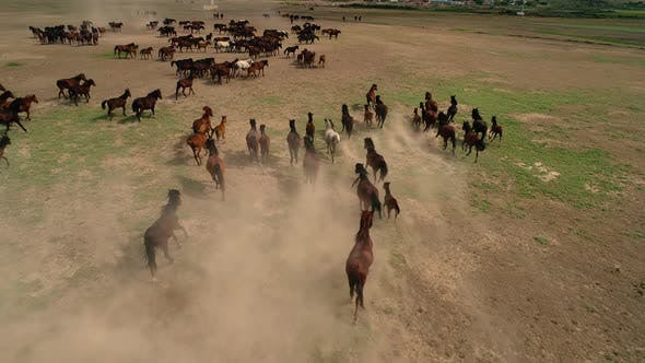Thumbnail for Horses Running Stampede