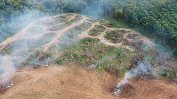 Thumbnail for Aerial View of Rainforest Deforestation in Action