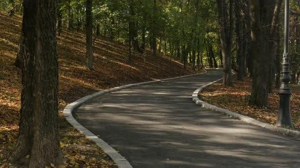 Thumbnail for Bunte Bäume im Herbst in Craiova 3840X2160 UltraHD Filmmaterial - Herbstliche gelbe und orange Farbe