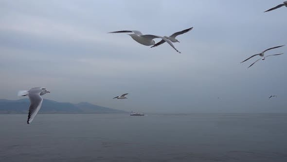 Seagulls Flying In The Gray Clean Sky. Close Up Flock Of Birds Flies Slow Motion