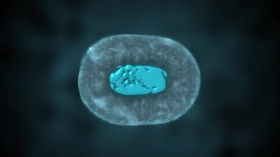 Cell Division or Cloning Cells