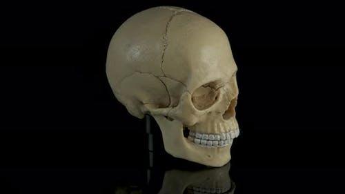 Anatomie Cranium