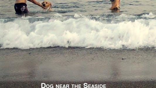 Thumbnail for Dog Near The Seaside 1