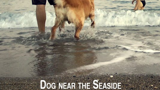 Thumbnail for Dog Near The Seaside 2