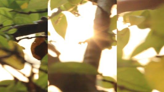 Thumbnail for Sunrise Leaves Slider Shot (3-Pack)