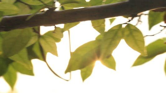 Thumbnail for Sunrise Leaves Slider