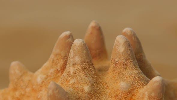 Thumbnail for Starfish on Sand, Rotation, Closeup