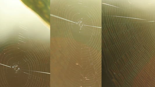 Thumbnail for Spider Web Slider Pack 1 (3-Pack)