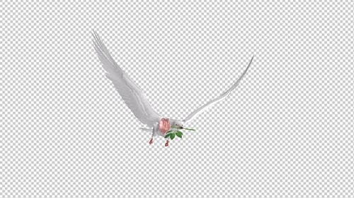 White Dove with Pink Rose - Flying Cycle - Side Angle - 4K Transparent Loop