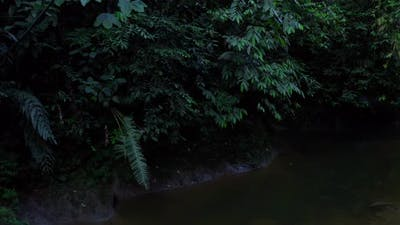 Background of a dark waterbody lined with trees with dark colored leaves