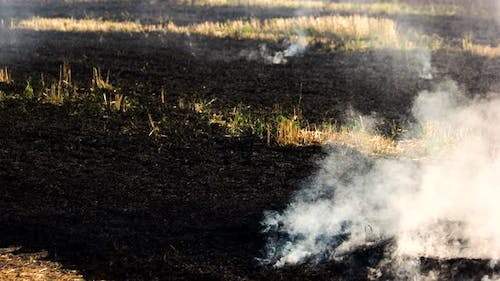 Smoldering Grass Ashes After Fire