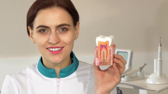 Thumbnail for Lovely Female Dentist Smiling To the Camera, Holding Up Tooth Mold 1080p