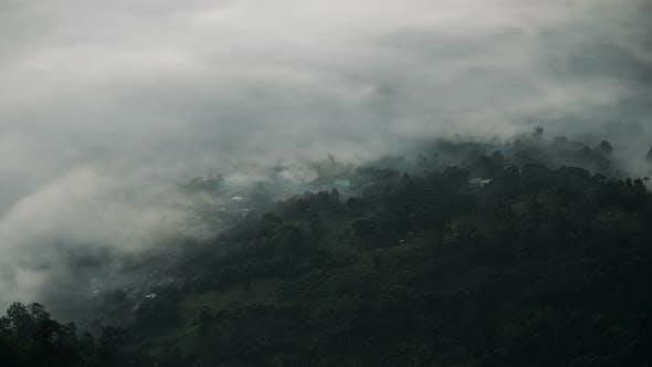 Thumbnail for Mystic Fog Forest