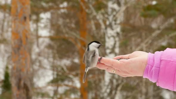 Cover Image for Bird in Women's Hand Eat Seeds