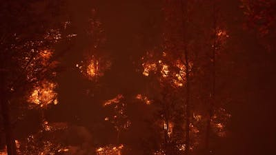 Large Flames of Forest Fire at Night
