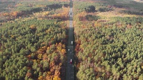 Car road in autumn wood