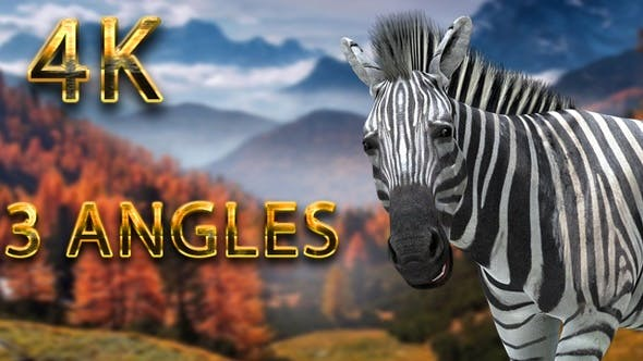 Thumbnail for Zebra eating from 3 different angles
