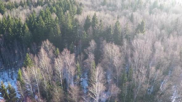 Coniferous trees and birches in winter mixed forest, aerial