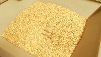 The Device Crushes Malt Grains