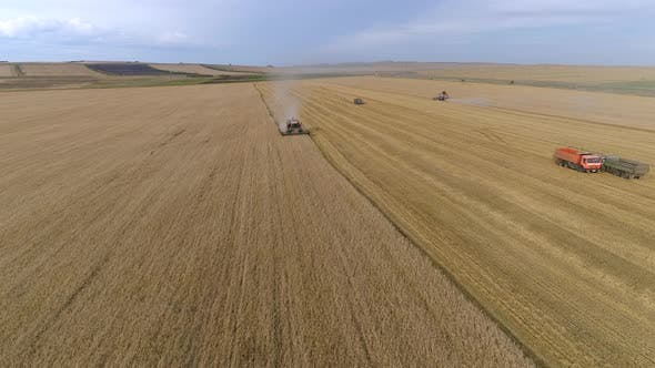 Thumbnail for Flying over Harvesting Wheat