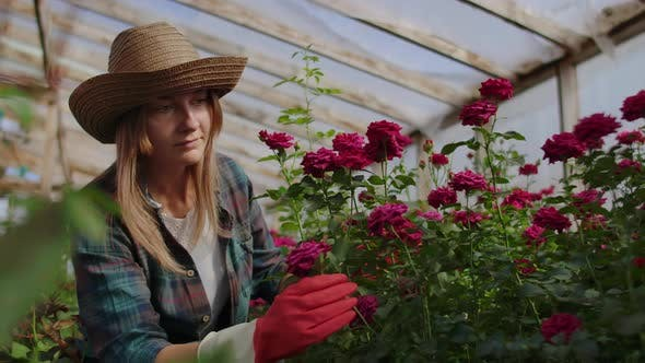 Thumbnail for Girl Florist in a Flower Greenhouse Sitting Examines Roses Touches Hands Smiling. Little Flower