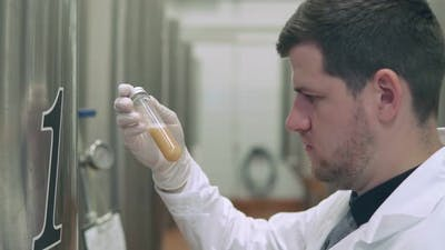 Scientist Checks the Condition of the Beer Wort