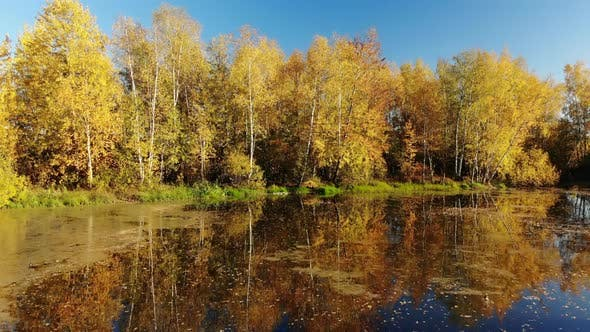 Thumbnail for Rise Above Russian Autumn Landscape with Birches and Pond