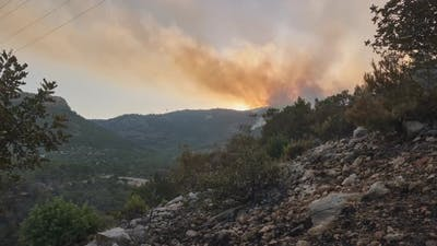 Smoke of Burning Forests