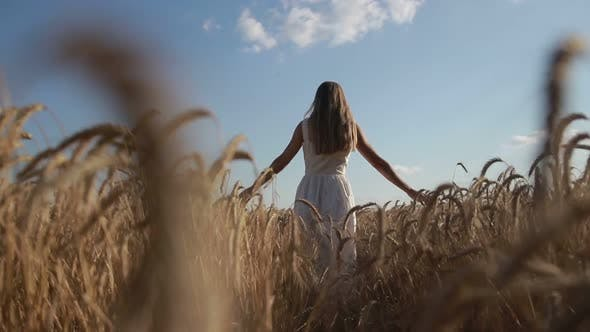Thumbnail for Girl with Arms Outstretched Walking on Wheat Field