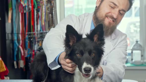 Thumbnail for Cropped Shot of Adorable Happy Healthy Dog at the Veterinary Clinic