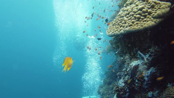 Thumbnail for The Underwater World of a Coral Reef, Leyte, Philippines