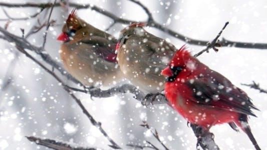 Thumbnail for Heavy Snowfall Loop