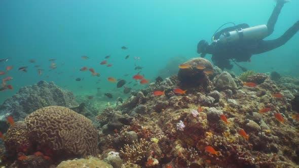 Thumbnail for Scuba Diver Underwater. Philippines, Mindoro