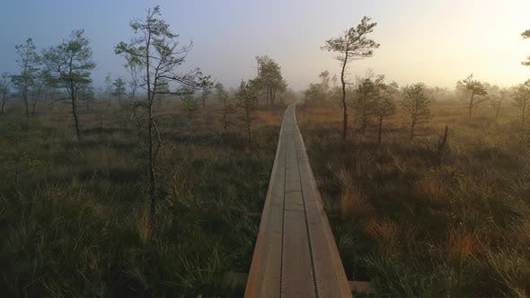 Thumbnail for Wooden Pathway in Wild Nature